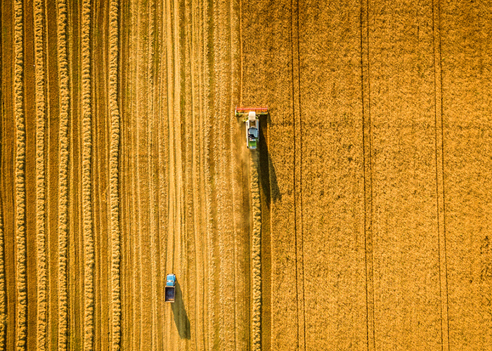 Ученые устроили геноцид пшеницы с помощью секвенатора генома