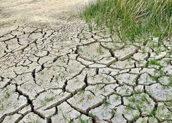 Ущерб от засухи рассчитают в Оренбургской области