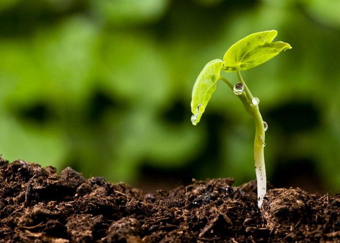 ВГосдуме планируют защитить плодородные земли