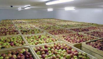 В Липецкой области состоялось открытие фруктохранилища