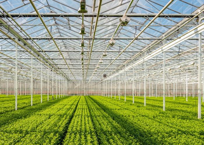 Photo of В Магадане в 2020 году построят тепличный комплекс