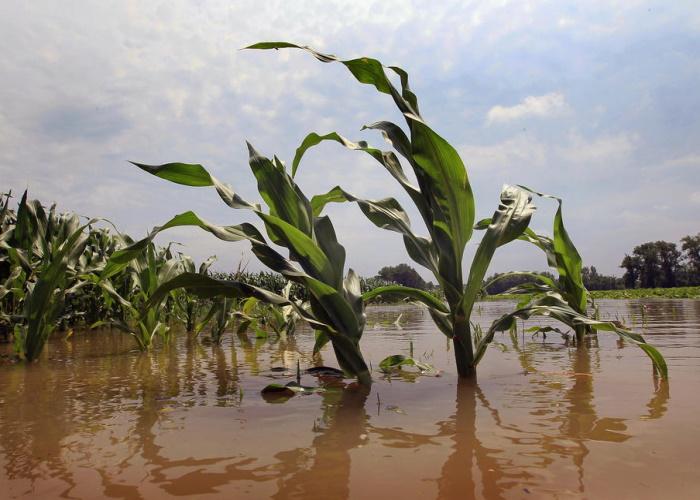 В Минсельхозе оценили ущерб аграриев от ЧС в 2019 году