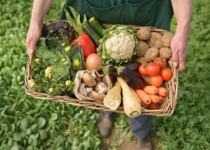 В России начал работу национальный центр компетенций органической продукции