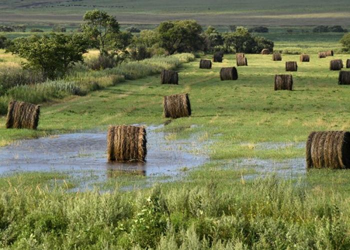 В Свердловской области ради урожая могут ввести режим ЧС из-за дождей