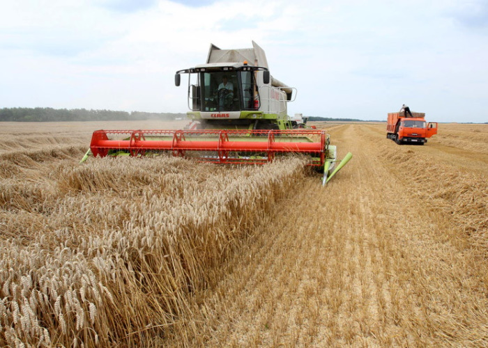 ВУдмуртии из-запереувлажнения почвы несмогли убрать более 200тыс. тонн зерна