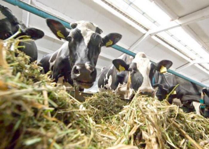 В Ульяновской области открылся новый современный животноводческий комплекс