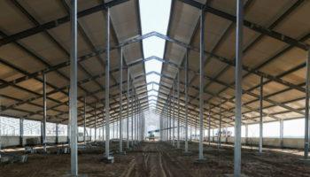 В Волгоградской области откроется крупнейшая молочная ферма