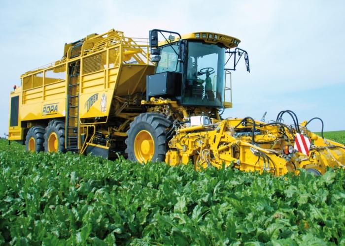 В Воронежской области создадут новые сорта сахарной свеклы