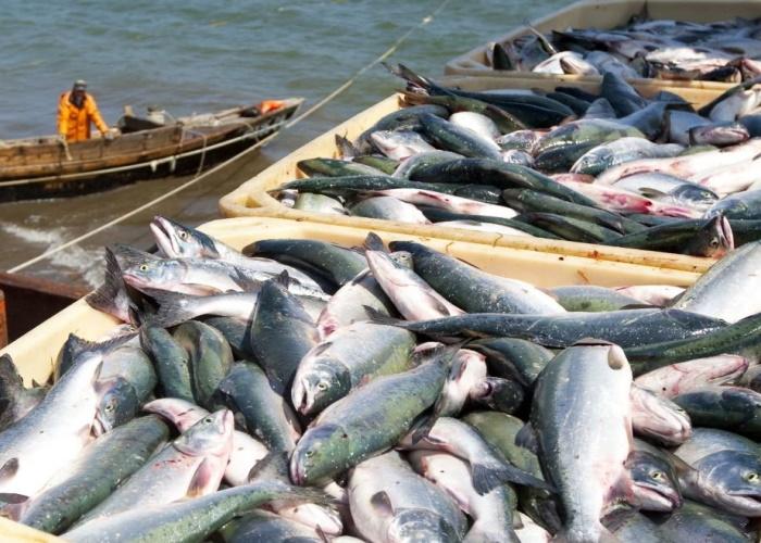 Внесены правки в порядок предоставления инвестиционных квот на добычу водных биоресурсов