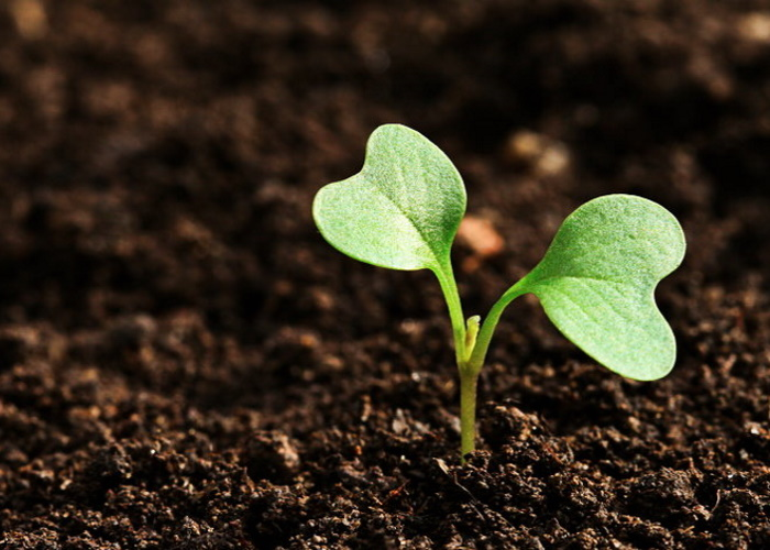 Восстанавливать плодородие сельхозземель предстоит скартой вруках