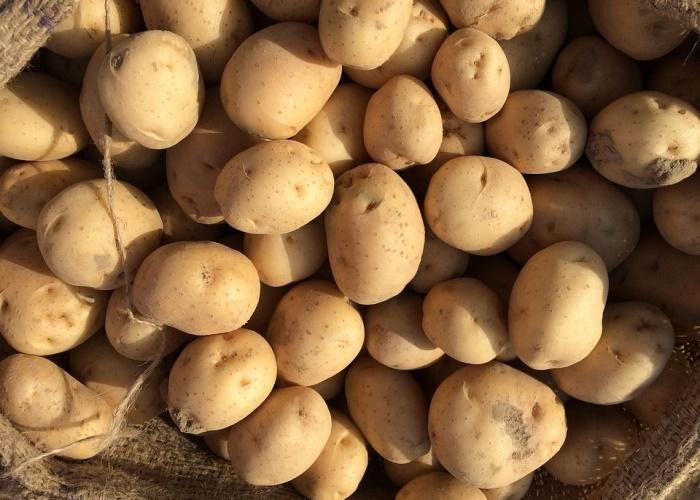 Завод по переработке картофеля открылся в Тюменской области