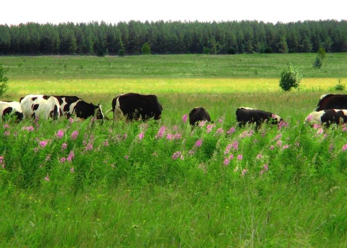 Животноводам Забайкалья хотят бесплатно выделять по 10 га земли