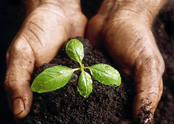 Агрохолдинг «Краснобор» начинает производить удобрения