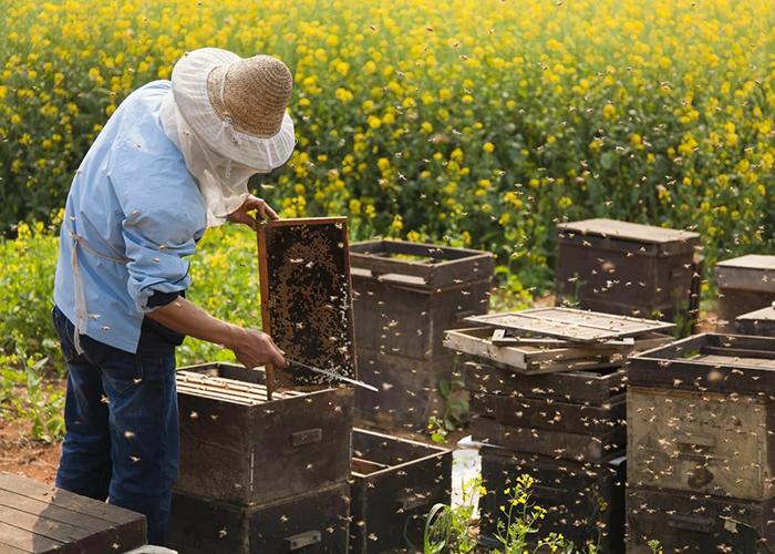На поддержку тульских пчеловодов в 2020 году выделят 20 млн рублей