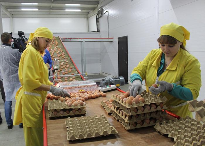 В Пензенской области открыли крупнейшую в регионе птицефабрику