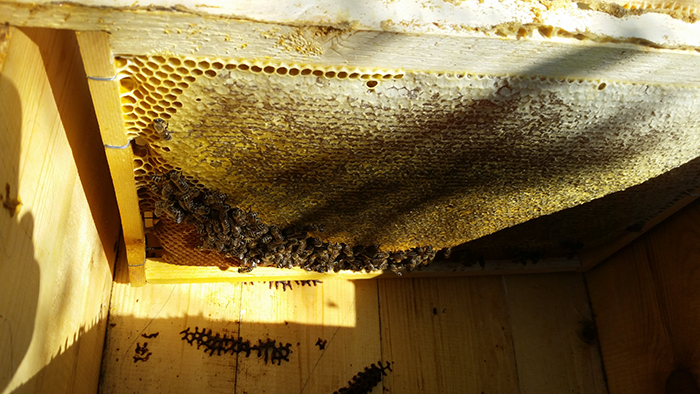Причины удлинения хоботка пчел. Эволюция опыления.