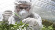 Биотехнологии в сельском хозяйстве для изготовления или модификации продуктов для практических целей