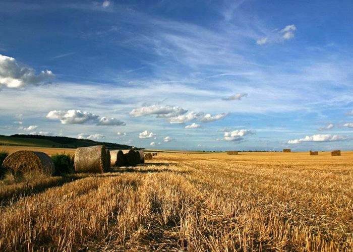 Более 1_2 млн сельхозугодий Дагестана проверили на наличие вредителей
