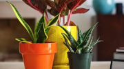 Четыре способа поливки цветов, когда вас нет дома