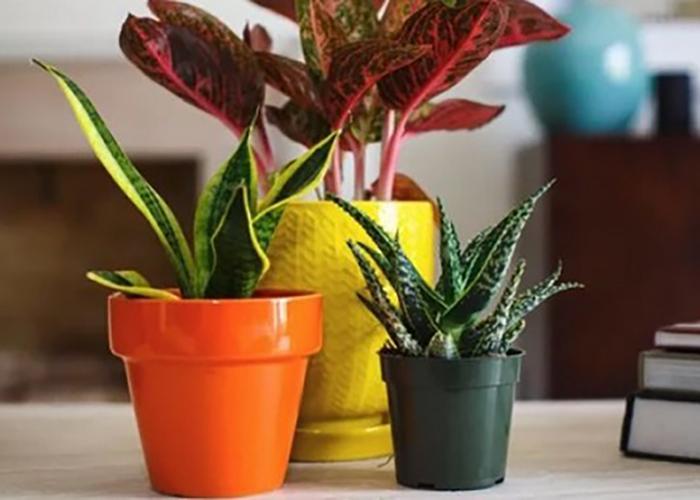 Четыре способа поливки цветов когда вас нет дома