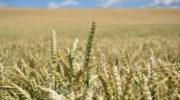 День работника сельского хозяйства и перерабатывающей промышленности отмечается в России