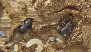 Где и как зимуют насекомые-вредители