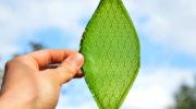 Искусственный лист успешно производит чистый газ