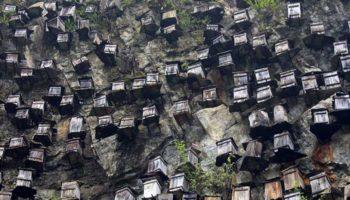 Как это делают в других странах: пчеловодство в Китае