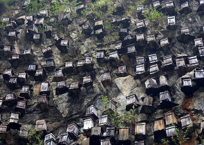 Как это делают в других странах пчеловодство в Китае