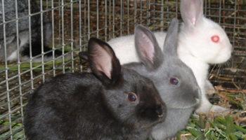 Клетки для молодняка кроликов
