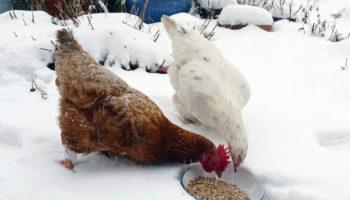 Корма для птицы на зиму