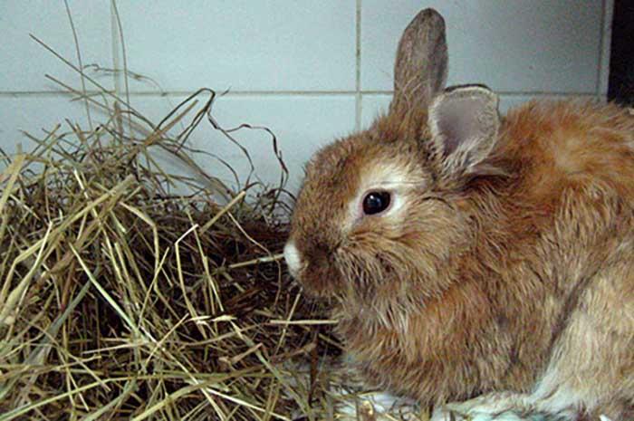 лечения кокцидиоза кроликов