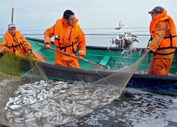 Минсельхоз не ожидает роста цен на рыбу из-за изменений в Налоговый кодекс
