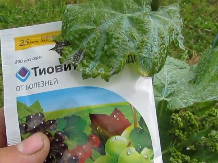Обработка винограда осенью фунгицидами