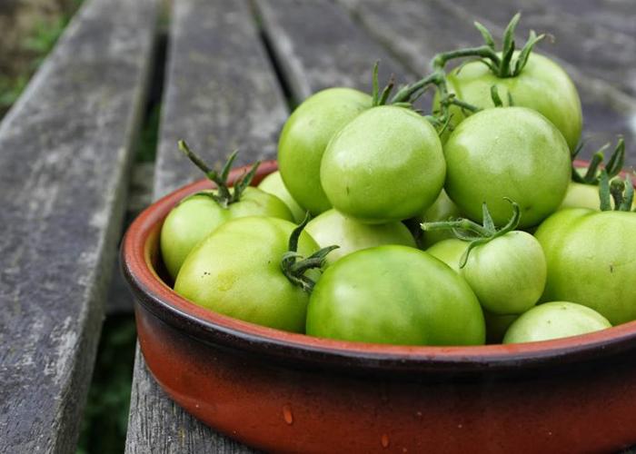 Photo of Почему помидоры остались зелеными