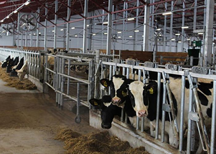Подмосковные ветеринары начали проверку скота на туберкулез