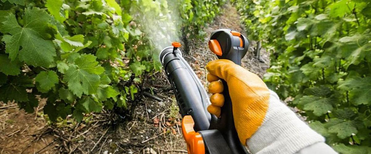 Чем опрыскать виноград перед укрытием на зиму