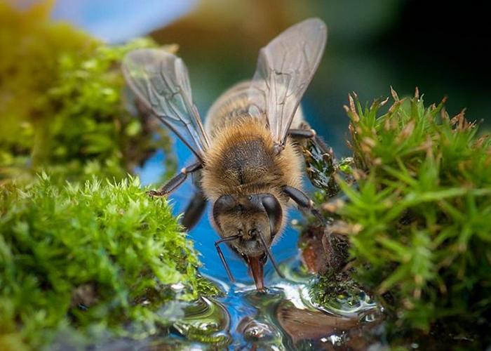 Причины удлинения хоботка пчел. Эволюция опылении.