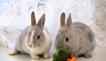 Список того что едят декоративные кролики