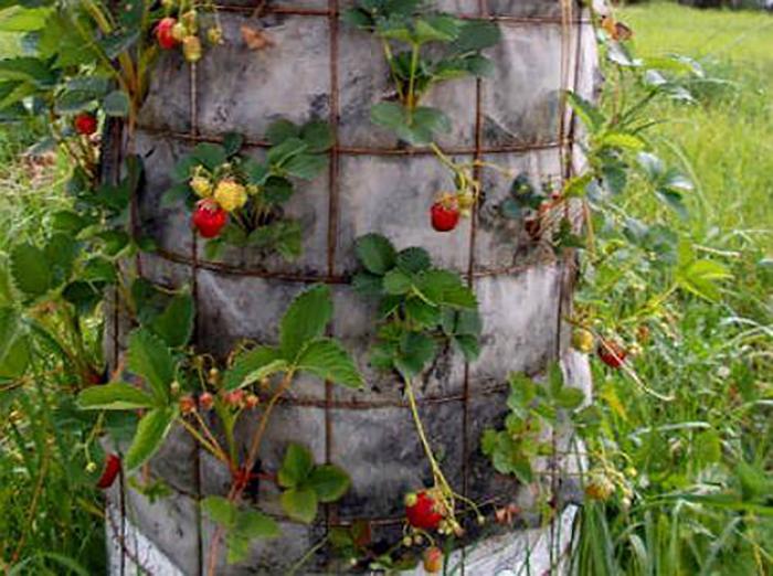 Способы вертикального выращивания