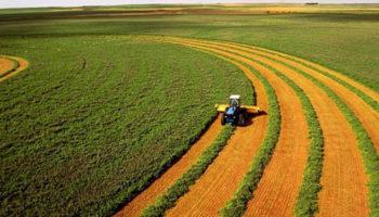 «Удар по сельскому хозяйству»: почему украинцы протестуют против земельной реформы