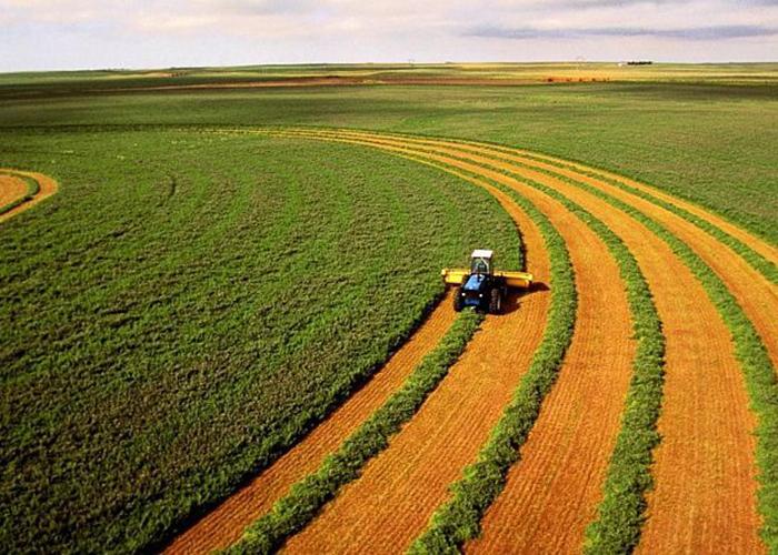 Удар по сельскому хозяйству почему украинцы протестуют против земельной реформы