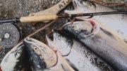 В Госдуму внесли законопроект об отмене плановых проверок в сфере рыболовства