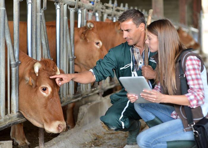 В Татарстане объявлен дополнительный конкурс на получение грантов по программе развития семейных животноводческих ферм на базе КФХ