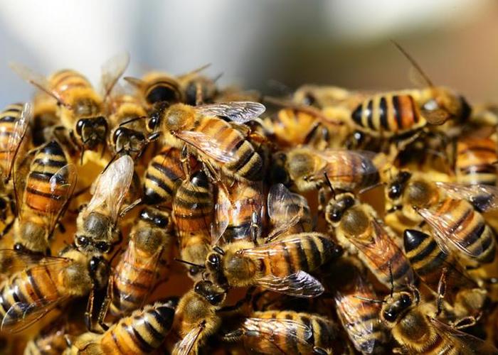 Виновниками мора пчел в Тульской области оказались шесть сельских хозяйств