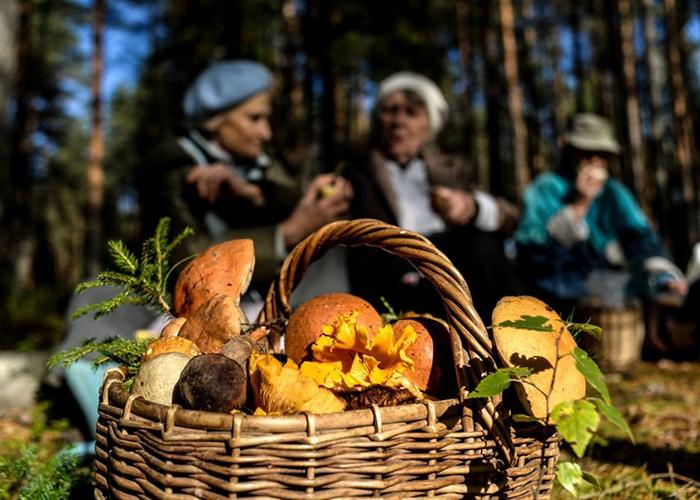 Ввели штрафы за сбор редких грибов