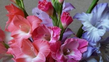 Выращивание гладиолусов: уход и хранение