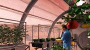 Выращивать растения на Марсе — реально