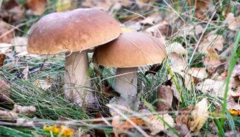 Биотех-стартап из Нью-Йорка борется с пластиком с помощью грибов