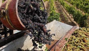 Депутаты Госдумы предложили снять запреты на рекламу вина российского производства